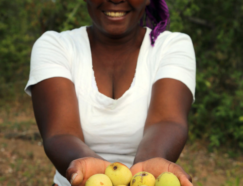 Thanks to marula, Suku no longer depends on her husband's income