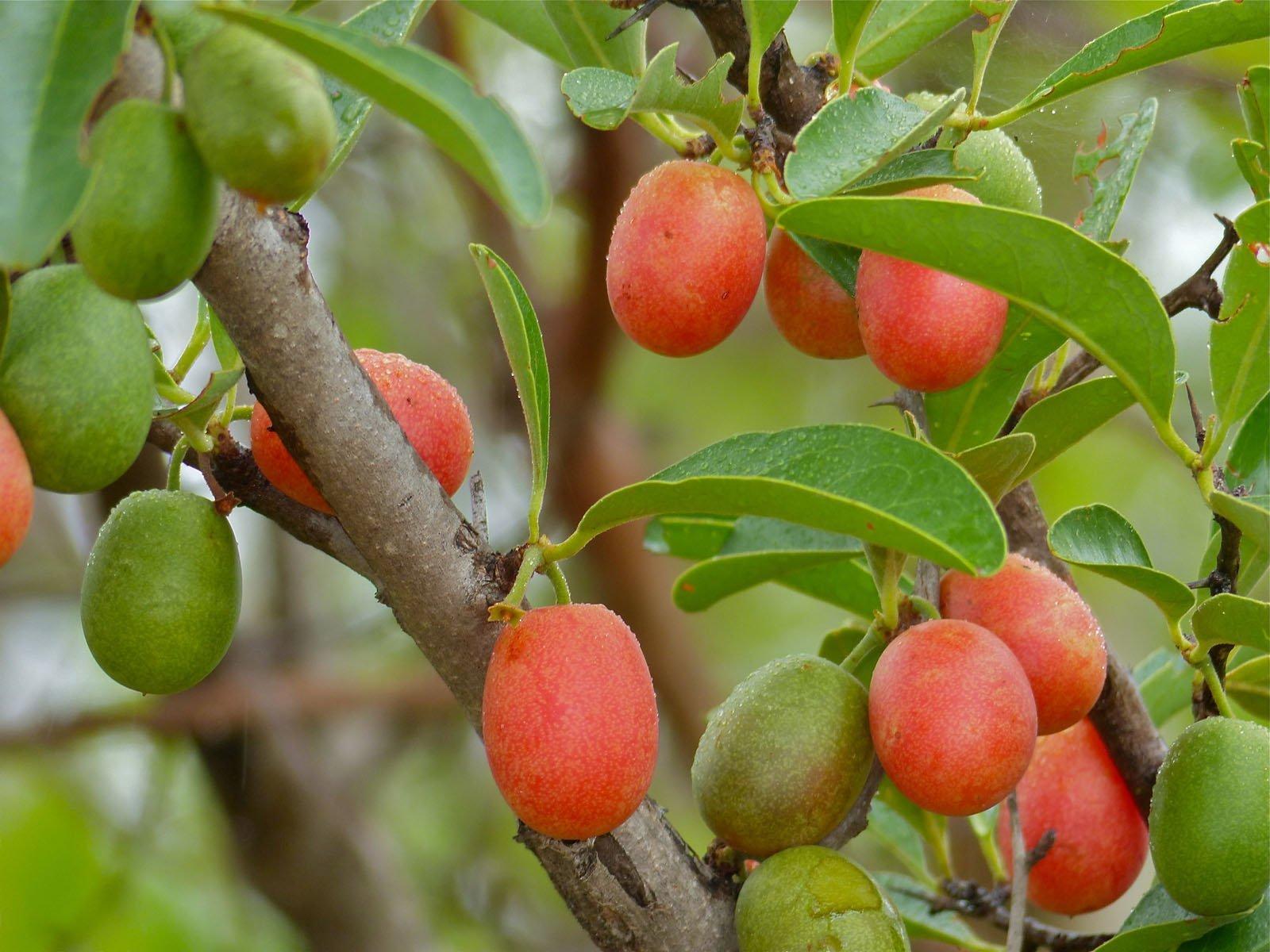 fruit nurseries in zimbabwe thenurseries